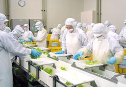 食品加工・計量・包装作業  求人番号3491-02 イメージ